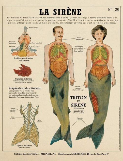 Planche créatures Surnaturelles par Camille Renversade La sirène