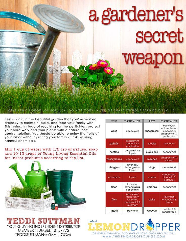 420 Best Pest Repellent Images On Pinterest Garden Pests Pest Control And Vegetable Garden