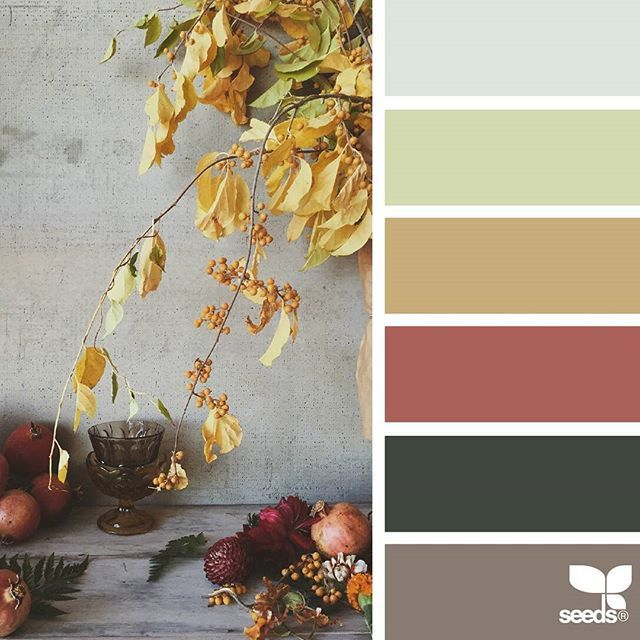 today's inspiration image for { color season } is by @natashakolenko ... thank you, Natasha, for another wonderful #SeedsColor image share!