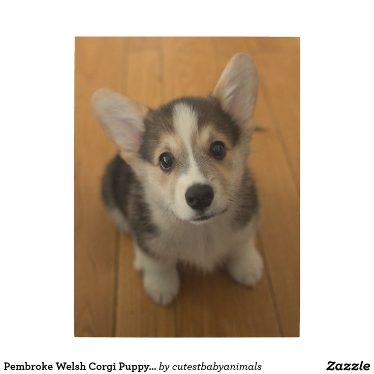 Pembroke Welsh Corgi Puppy 3 Wood Wall Art | Zazzle.com   – Nursery Art & Wall Décor
