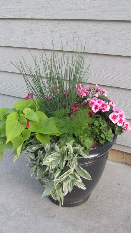 Nice combination in this pot...variety in textures, heights and colors  August Fields