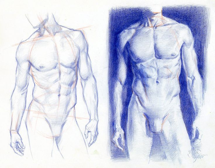 Torsos STRUCTURE AND VALUE STUDY by AbdonJRomero on deviantART