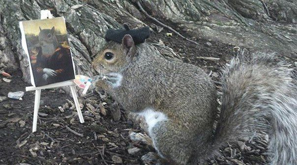 LADlaDknBojpg БЕЛКА фото Pinterest - Student befriends campus squirrels then dresses them in the cutest outfits ever