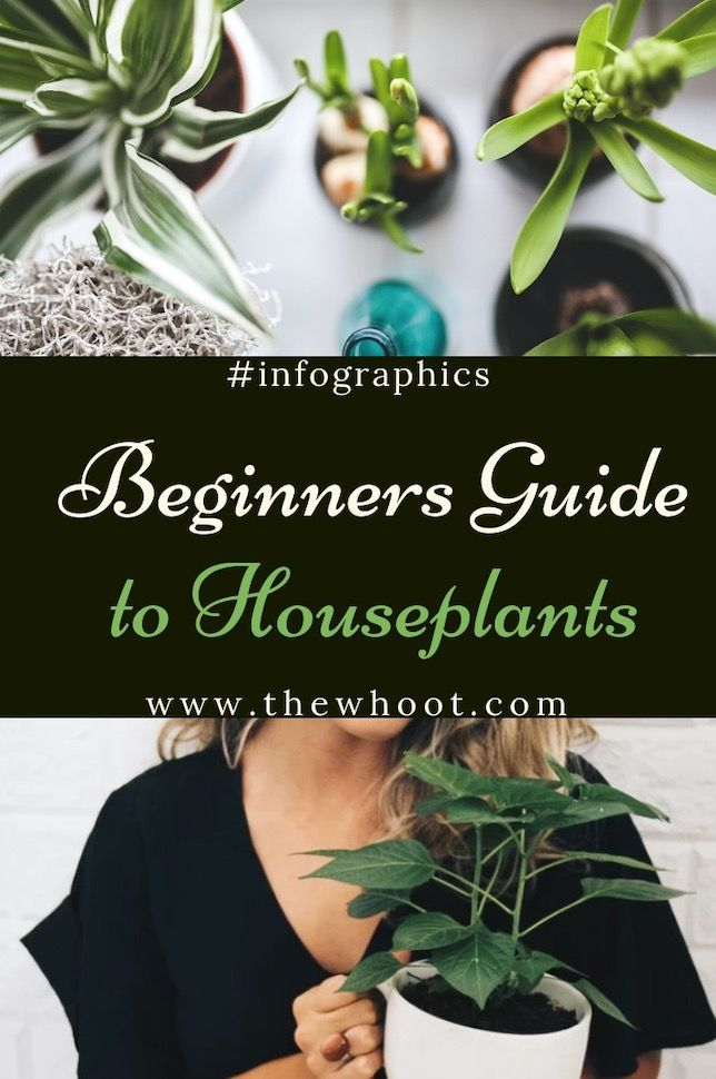 Beginners Guide To Houseplants Ultimate Guide Video Houseplants