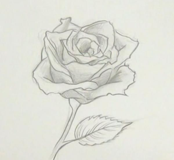 Ms de 25 ideas increbles sobre Cmo dibujar rosas en Pinterest