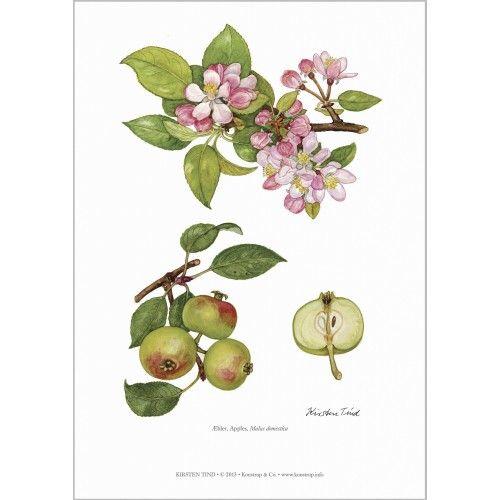 Koustrup & Co. kunsttryk i A4 - æblegrene