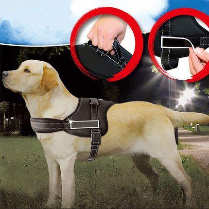 Жгут собака большая собака с Жгут собака тяговой канат собака цепи Golden…