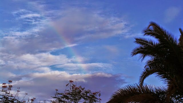 Desde las Islas Canarias  ..Fotografias  : Colores de la Naturaleza ...Maspalomas ...Gran Can...