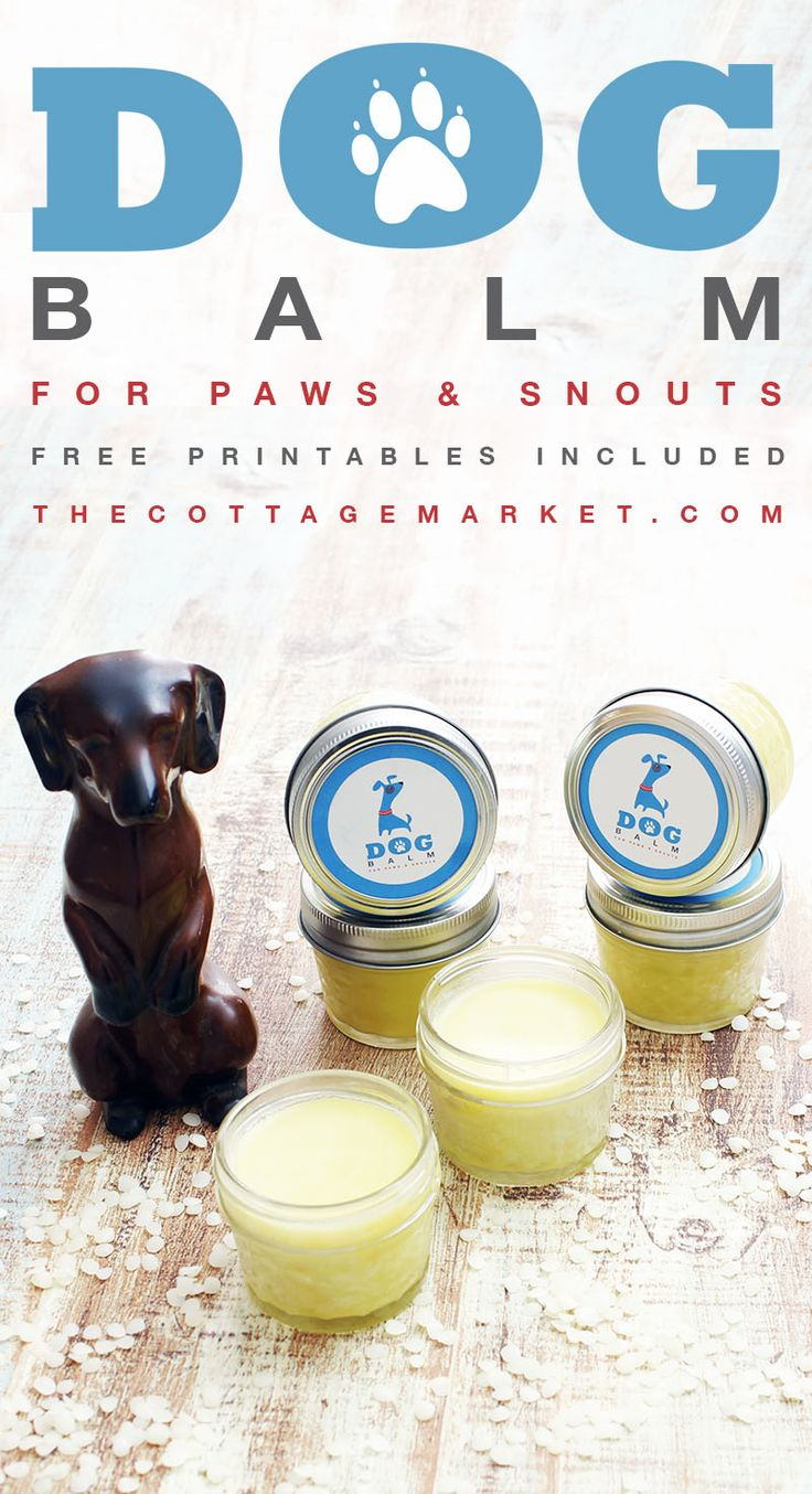 It's all about your Dogs Paws today. Just like our hands get dry and crackly in the Winter Months (and we don't walk on them : ) so does your furry friends! So why not take care of those doggy pads