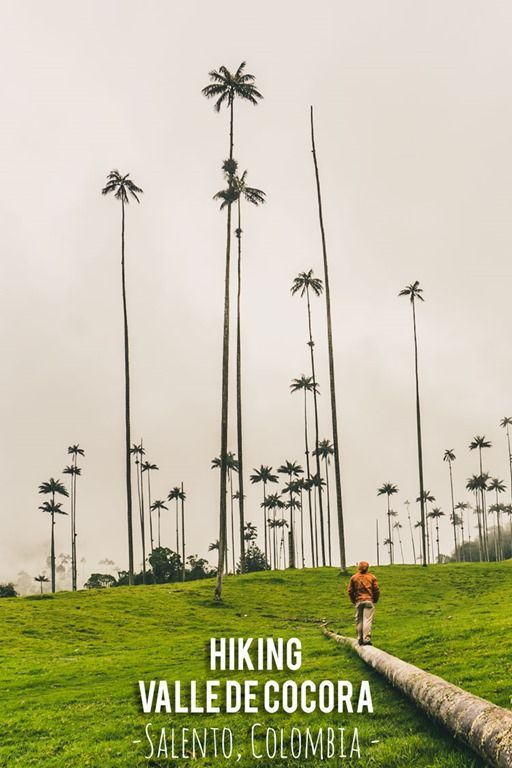 There's no place quite like the Cocora Valley in Colombia... Towering wax palms stretch over broad green fields. It's impressive, it makes you feel small, and it is a beautiful place to hike.