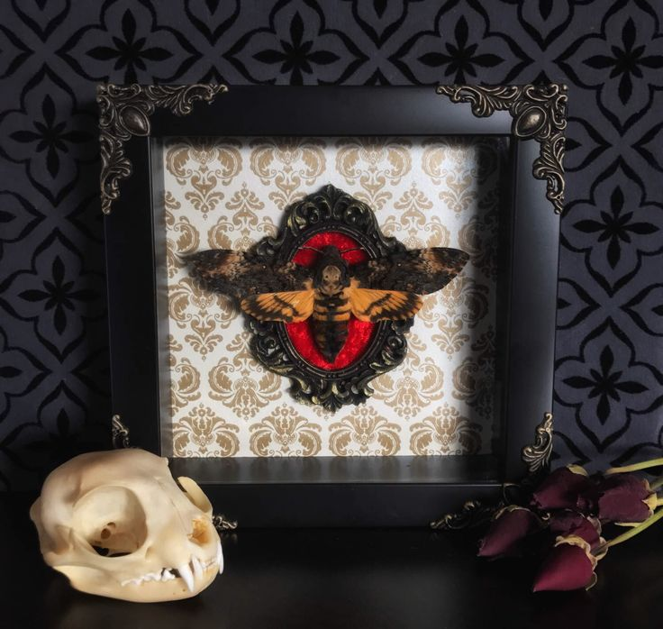 Deaths Head Moth Shadow Box, Taxidermy, Real Butterfly, Framed Butterfly, Preserved Butterfly, Victorian, Memento Mori, Gothic Decor by beyondthedarkveil on Etsy https://www.etsy.com/ca/listing/506697768/deaths-head-moth-shadow-box-taxidermy
