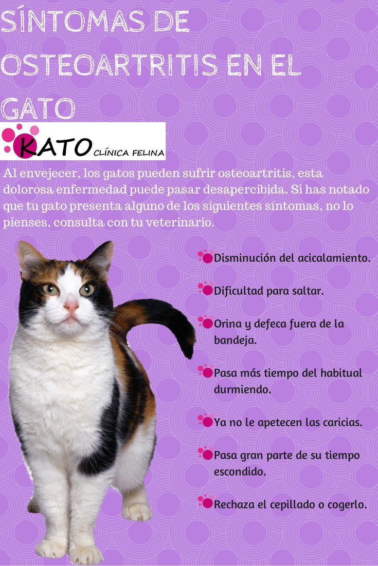 Síntomas de osteoartritis en el gato
