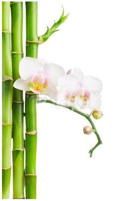 fototapetyM2-bambus2.jpg