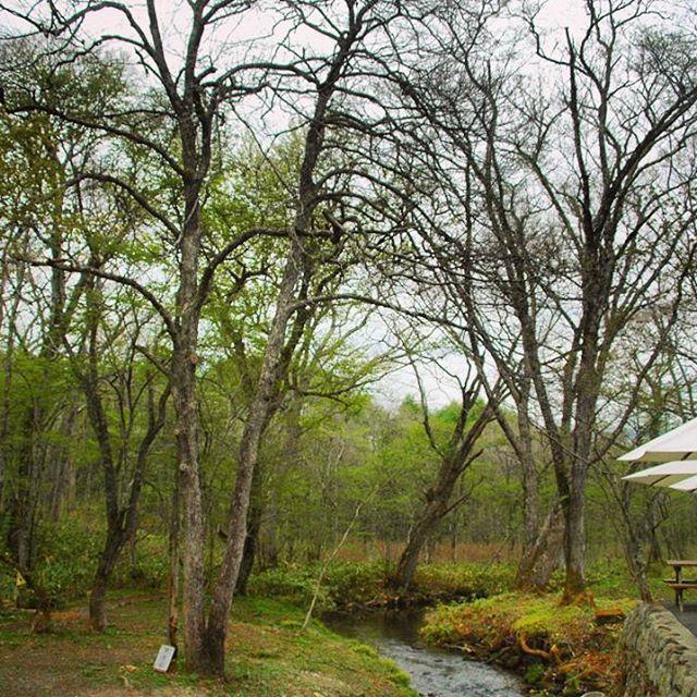 【yukinkoameonna】さんのInstagramをピンしています。 《#春よ来い 早くこい #寒い のツラいぜ #大寒波襲来 えらいこっちゃ~😱 オールNIPPON お気を付けあそばせー !!! #過去pic  #長野 #信州 #戸隠 #森 #白樺 #森林浴 #小川 #戸隠神社 #緑  #forest #tree_magic  #nature_brilliant #tree #whitebirch #creek #japan_art_photography  #japan #instagood #instagram #instajapan #nature_lover  #nature #japan_daytime_view #cloudy》
