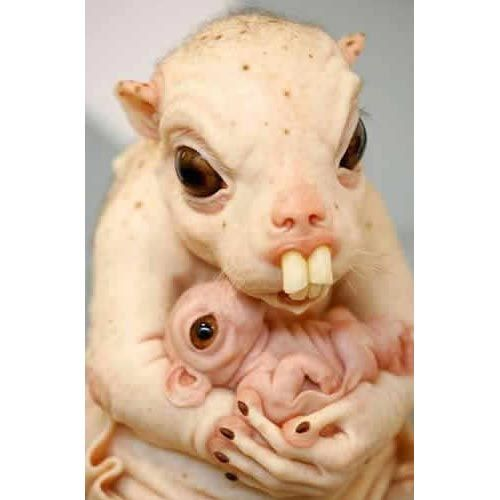 Creepy Animals | 7c98ugly animal Freaked Out: Bizzarre Pics of Creepy Animals