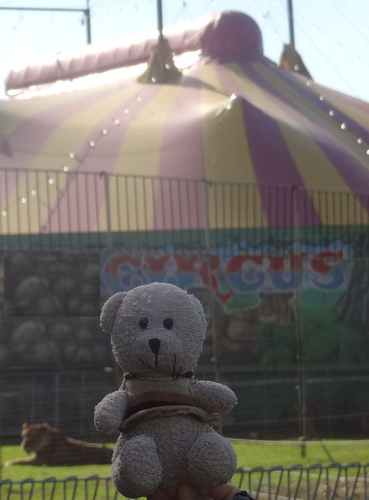 Teddy wants to join the #circus.