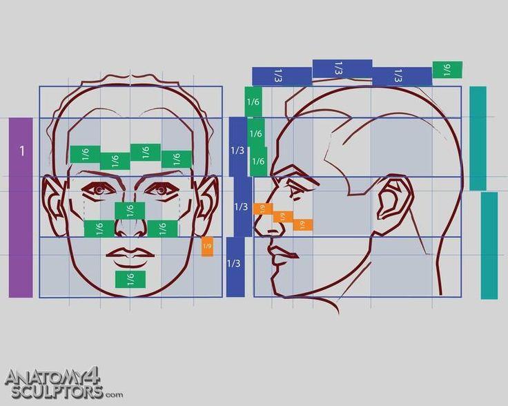 Anatomy For Sculptors - proportion calculator, store ...