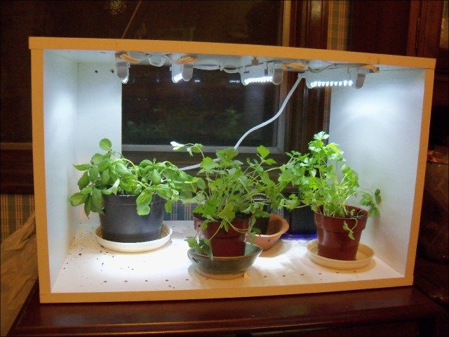 Kitchen Gardening Herb Light Cheap