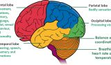 Epilepsy: New Data on Focal Seizures