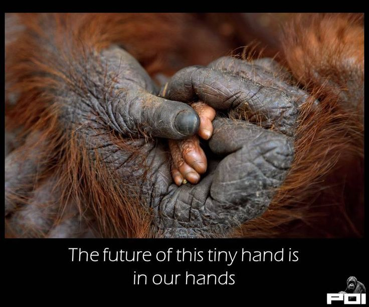 THE FUTURE OF THIS TINY HAND IS IN OUR HANDS!!!...Endangered species