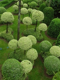 Topiary trees pinned with Bazaart