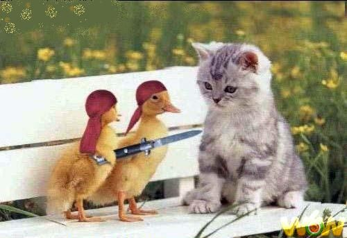 Funny Cat And duckling  Go away from here otherwise you'll be killed ! http://ift.tt/2fu8egQ