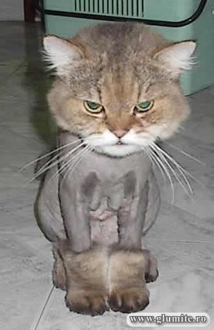 Poze Animale-Motanul incaltat Bancuri glume poze - Glumite.ro