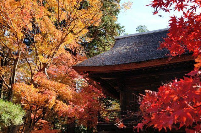 埼玉県の金鳳山 平林禅寺の2017紅葉情報。例年の色づき時期や見頃、地図・天気・交通アクセス情報はもちろん、ライトアップ日時やイベントなど開催情報をご案内。クチコミ・穴場情報も募集しています。