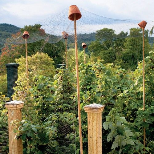 #PROTECT YOUR FRUIT BUSHES THE EASY WAY #Whether they're from the North or South, birds love Alabama's state fruit, blackberries. If they're enjoying yours before you get the chance, set up this low-tech line of defense.