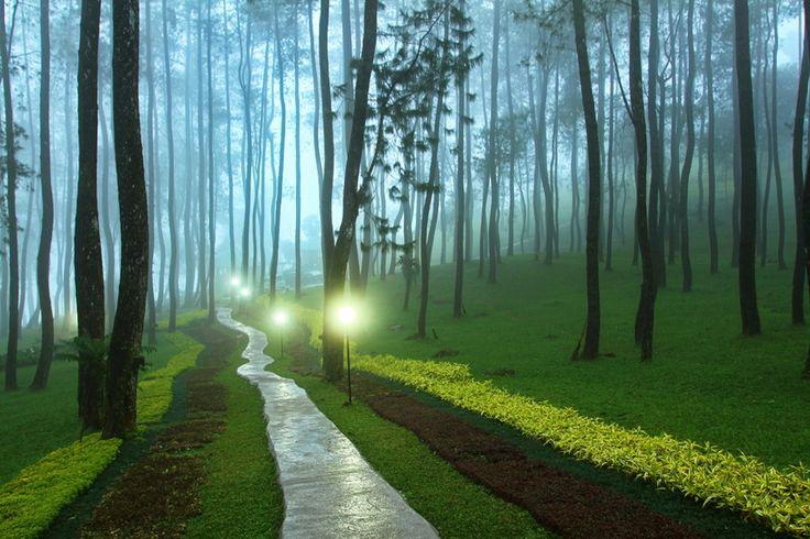 The Path by Hari Wiyadi  Cipendawa, West Java, Indonesia
