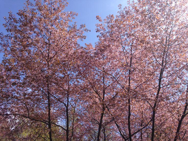 Pretty spring.