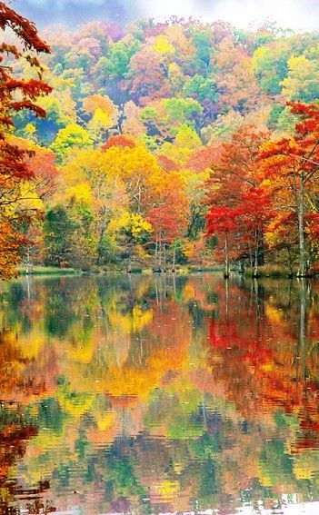 Beavers Bend State Resort Park | Travel | Vacation Ideas | Road Trip | Places to Visit | Broken Bow | OK | Campground | Nature Reserve. I'm going here in a few, weekends from, now. I can't wait!