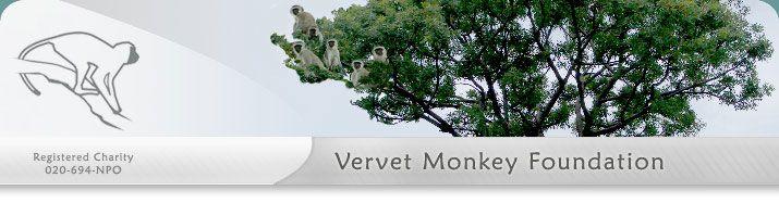 About the Vervet Monkey Foundation - all about monkeys, vervets, primates