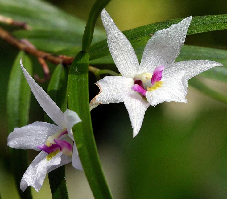 34 best images about new zealand native plants on pinterest
