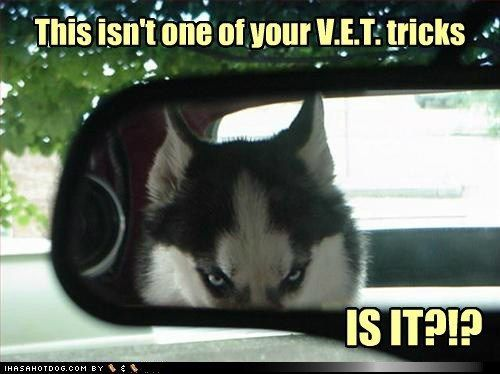 funny dog pictures with captions   funny-dog-pictures-all-right-then   Visit http://gwyl.io/  for more diy/kids/pets videos
