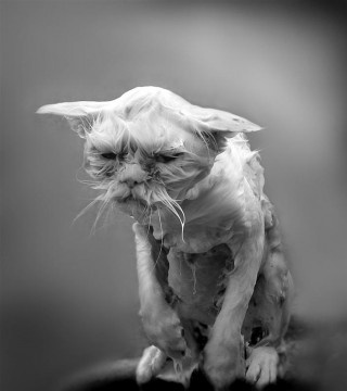Think happy thoughts, think happy thoughts.....: Happy Thoughts, Homecoming Weeks, Kitty Cat, Funny, Wet Cat, Grumpy Cat, Stress Management, Animal, Bath Time