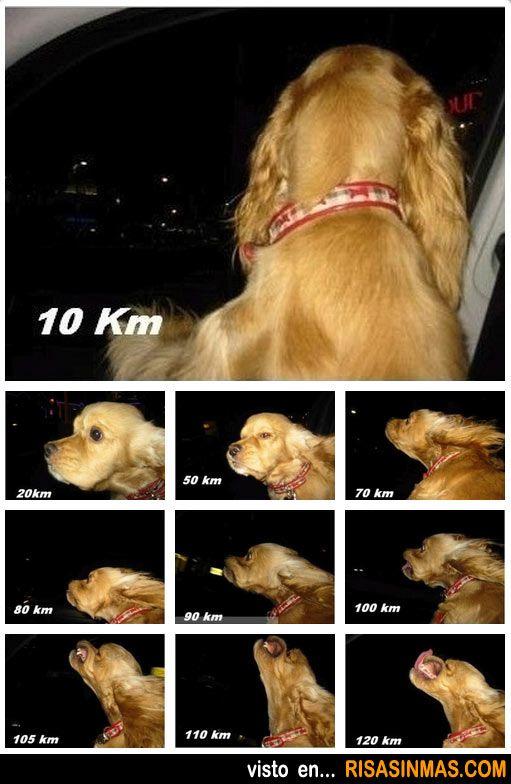 La cara de tu perro según la velocidad de tu coche.
