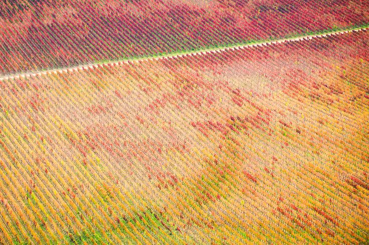Beautiful landscape and patterns of a vineyard in San Fernando, Chile