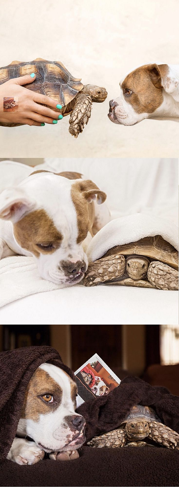 Where would a dog be without his tortoise?