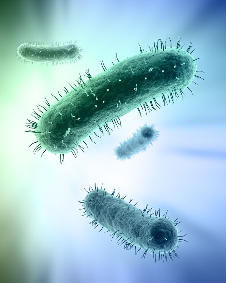 Best Beneficial Microorganisms for Your Medical Marijuana