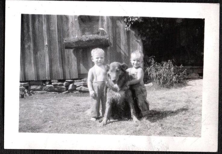 VINTAGE PHOTOGRAPH 1940'S BOYS BIG COLLIE DOG FORT DAVIS PECOS TEXAS OLD PHOTO