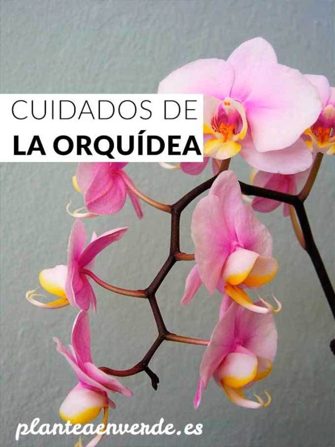 39 best ORQUIDEAS images on Pinterest | Plants, Growing orchids and ...