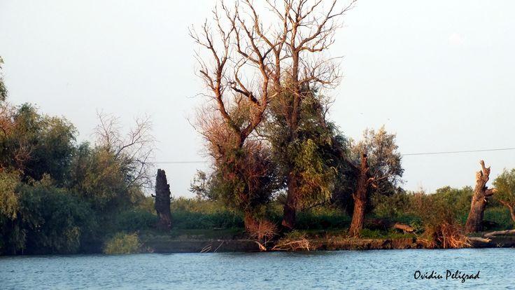 Delta Dunarii - Chilia Veche