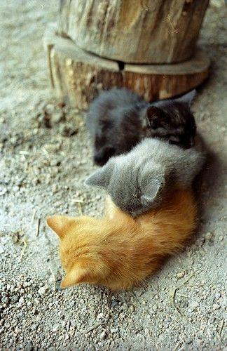 sleeping train of kittens