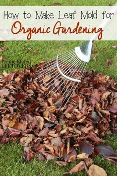 How To Make Leaf Mold For Organic Gardening   Tips For Using The Leaves  From Your