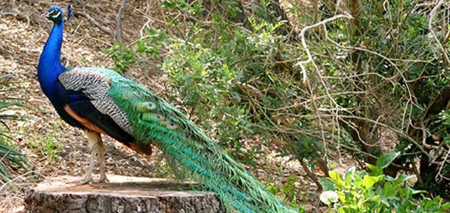 Want to explore wildlife in Odisha or need wildlife tour in Odisha, desiakoraput offering wildlife tour packages to explore Odisha wildlife.