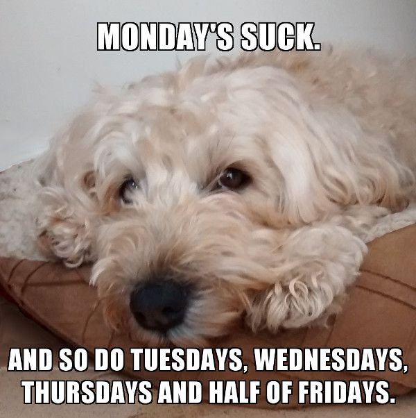 Tali the Wheaten's view of the week...