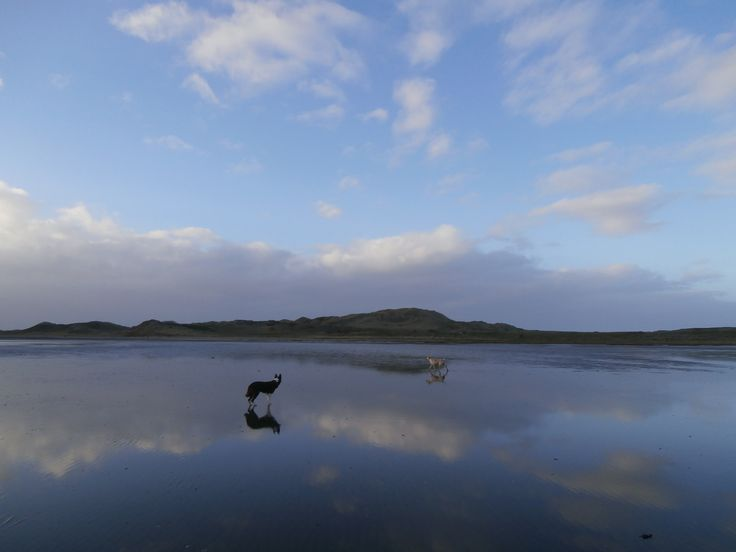 dogs, scenery, beach, reflection