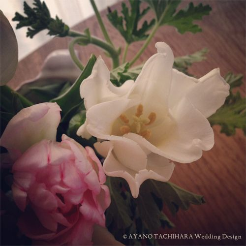 spring_flower_2
