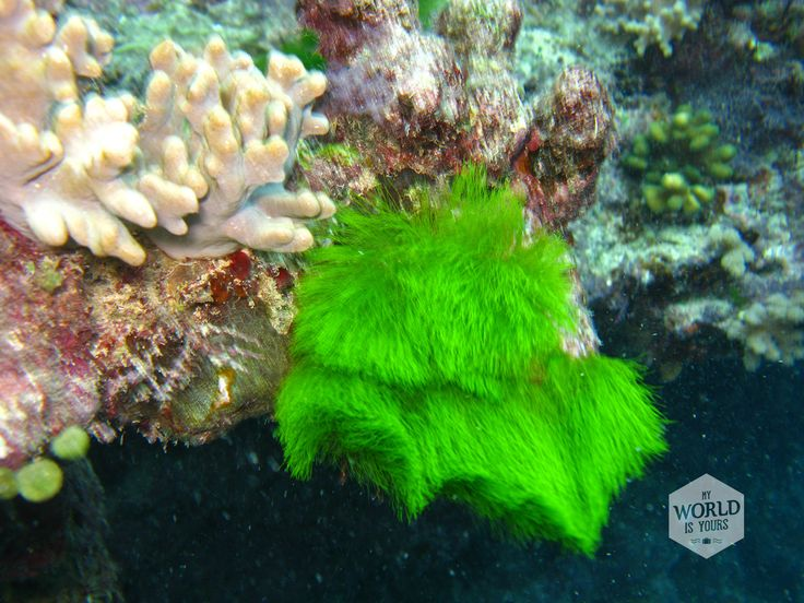 You can find all different colors of coral in the Great Barrier Reef, Australia. For example this green hairy bush.